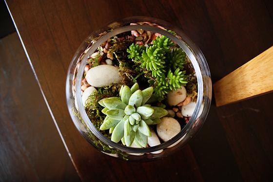 bowl-terrarium