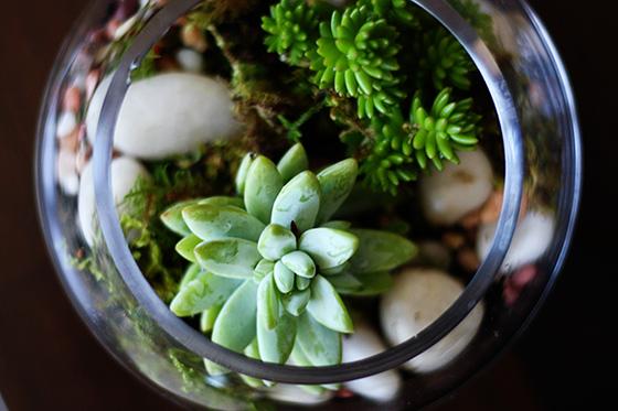 succulentsweb