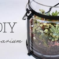 terrarium {diy}