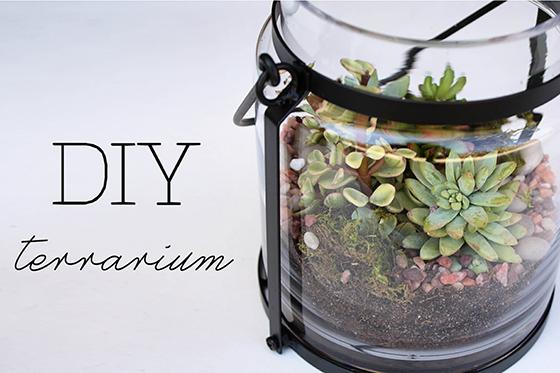 terrarium-title-web