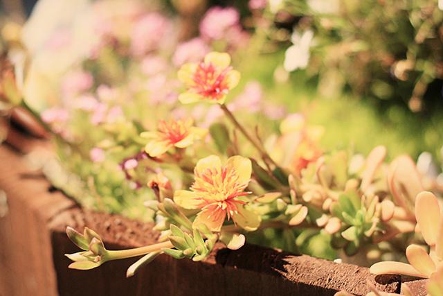 in-the-fairy-garden-1