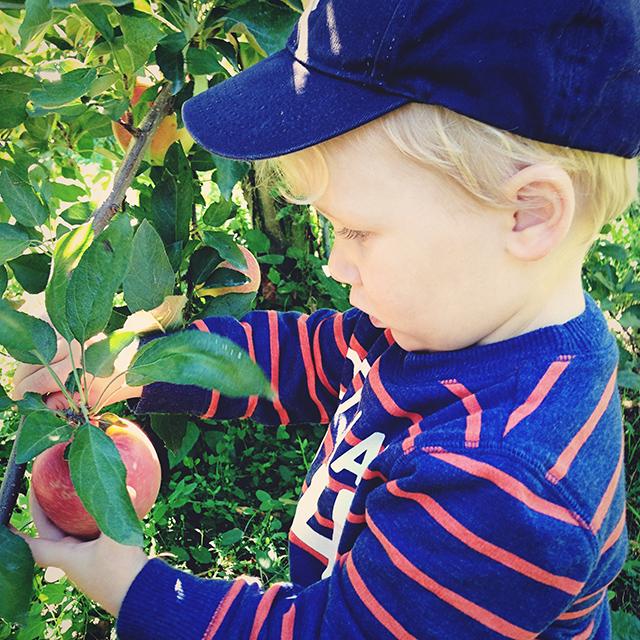 ronan's-apple