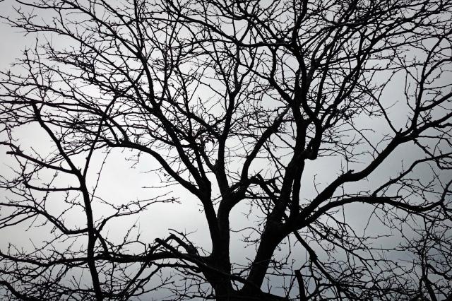 bare-tree2
