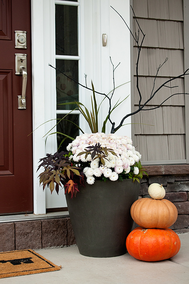 fall-potted-plants