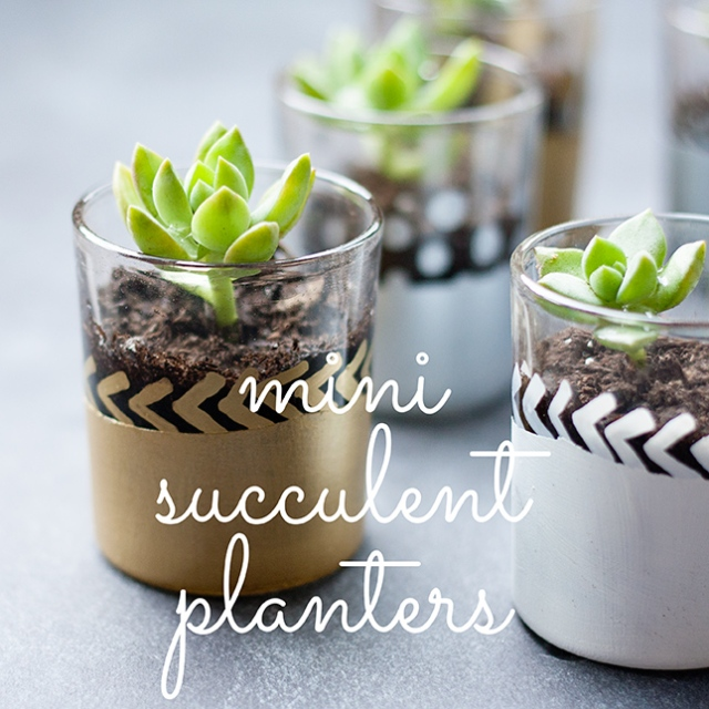 mini-succulent-planter-diy